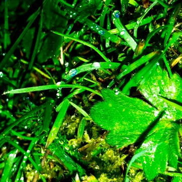 Lucky green charm?