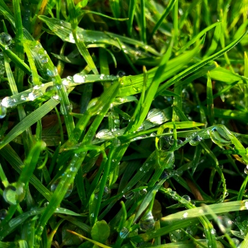 The morning grass with raindrops strewn across. The sun emphasizing the clarity of the raindrops. Visibly Hidden!