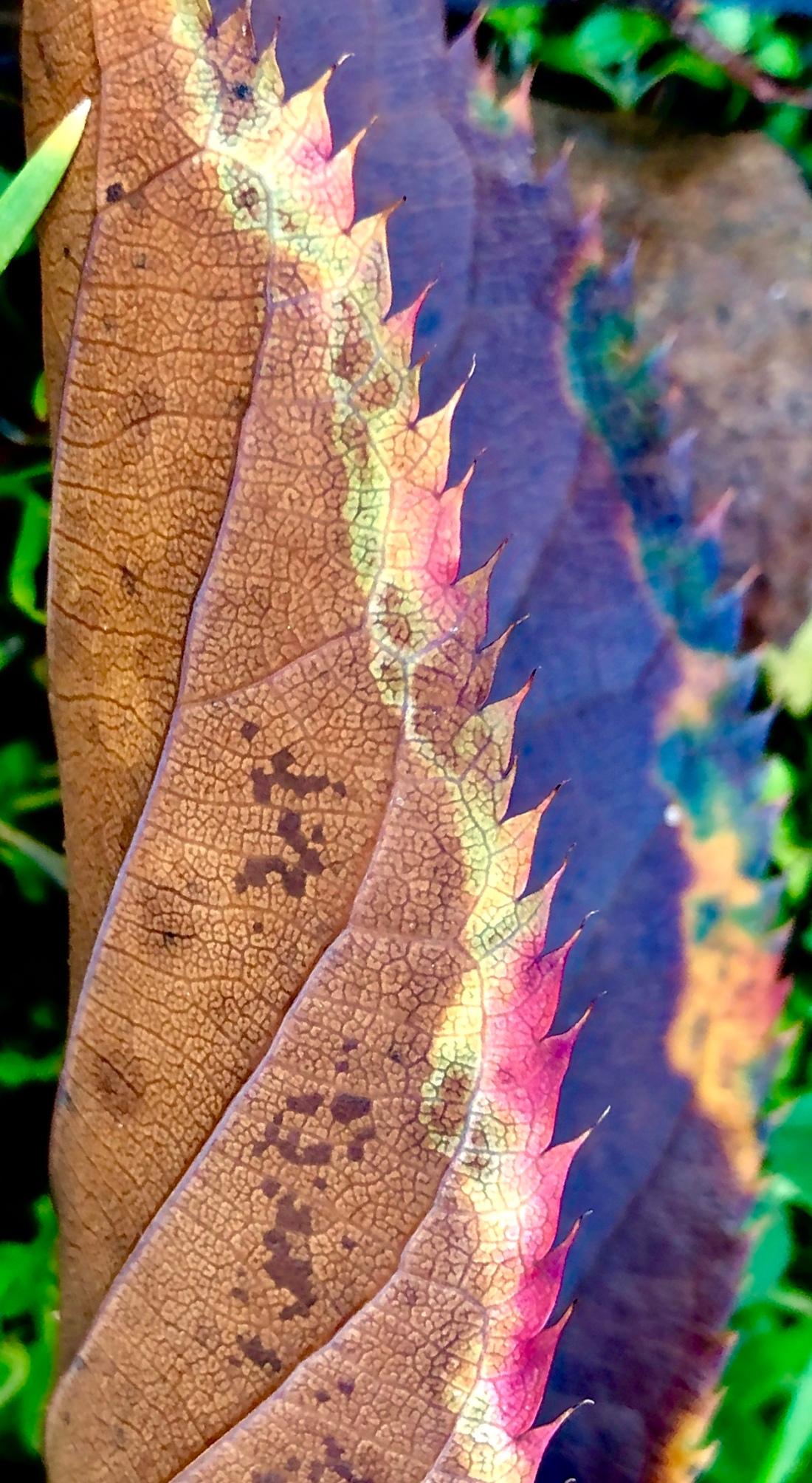 The Leaf Blade