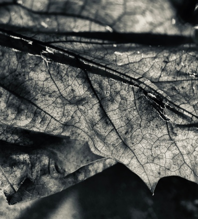 A black and white version of the Shadowed Leaf.
